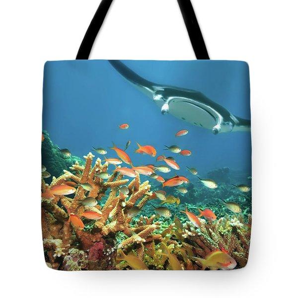 Fishes And Manta Ray Tote Bag