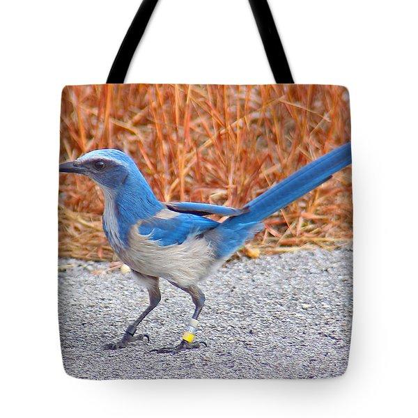 Florida Scrub Jay Tote Bag