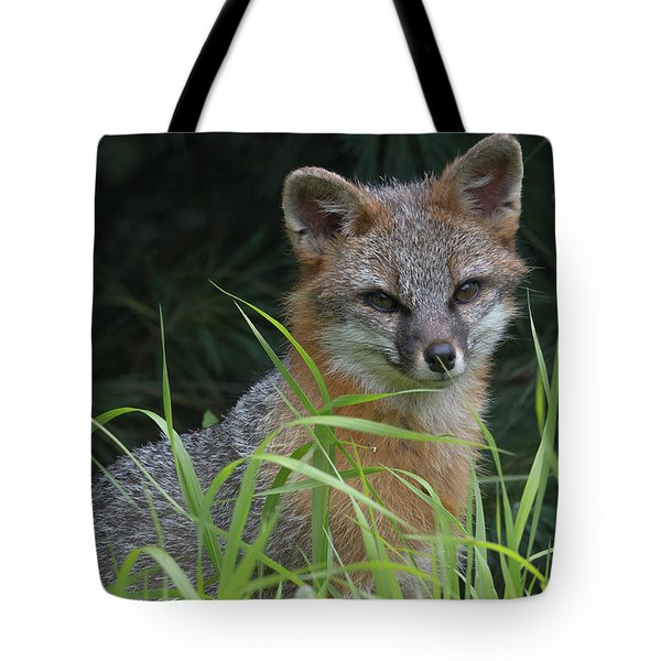 Gray Fox In The Grass Tote Bag