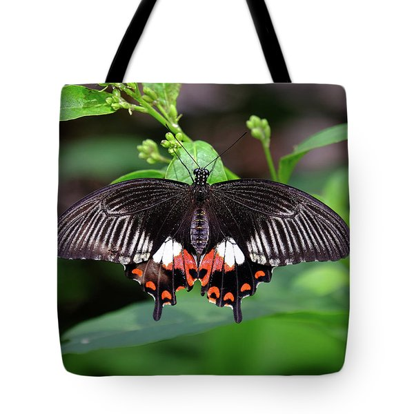 Great Mormon Butterfly Tote Bag by Ronda Ryan