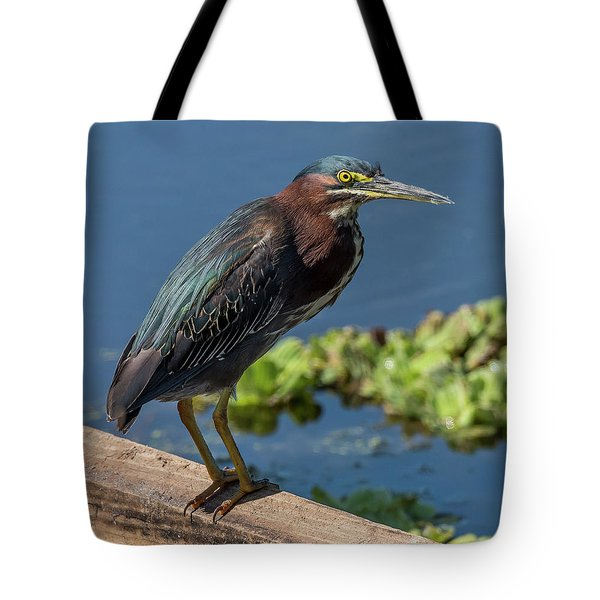 Tote Bag featuring the photograph Green Heron by Michael D Miller