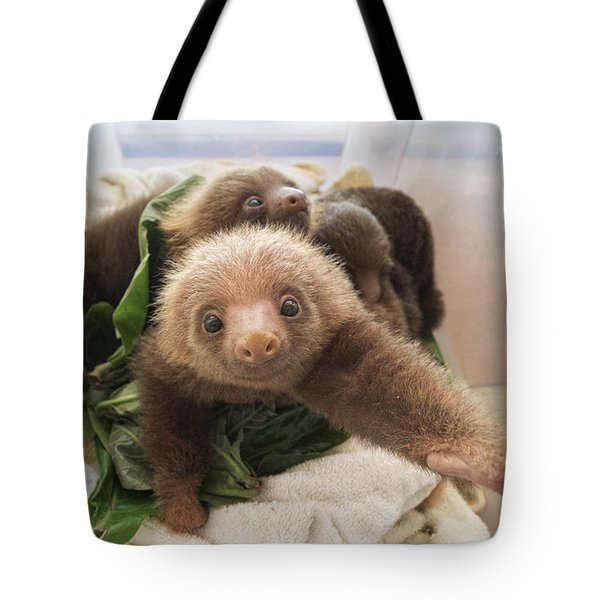Tote Bag featuring the photograph Hoffmanns Two-toed Sloth Choloepus by Suzi Eszterhas