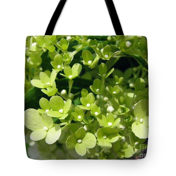 Hydrangea Tote Bag by Amanda Barcon