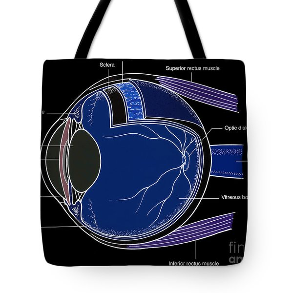 Illustration Of Eye Anatomy Tote Bag by Science Source