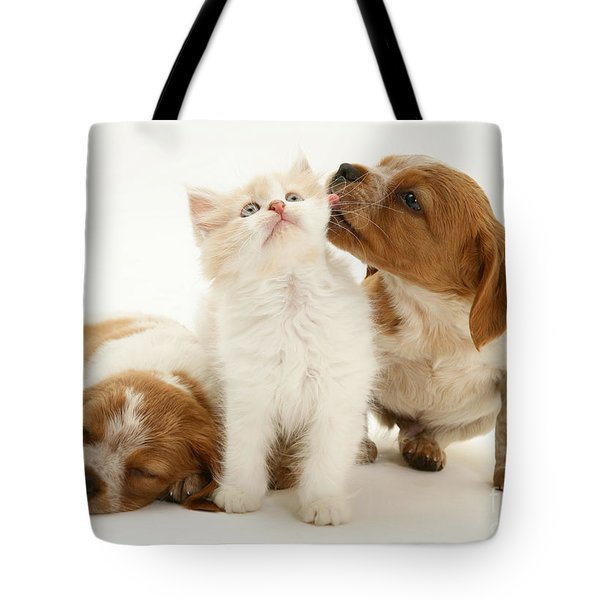 Kitten And Puppies Tote Bag by Jane Burton