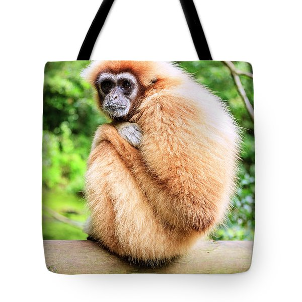 Tote Bag featuring the photograph Lar Gibbon by Alexey Stiop