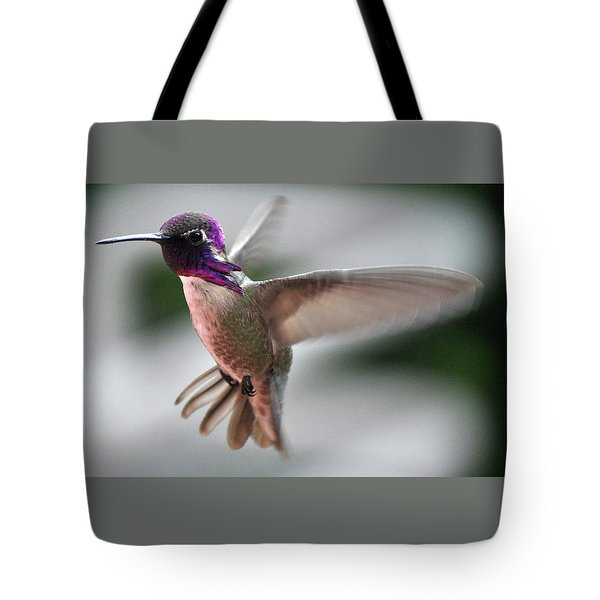 Male Anna's In Flight Tote Bag by Jay Milo