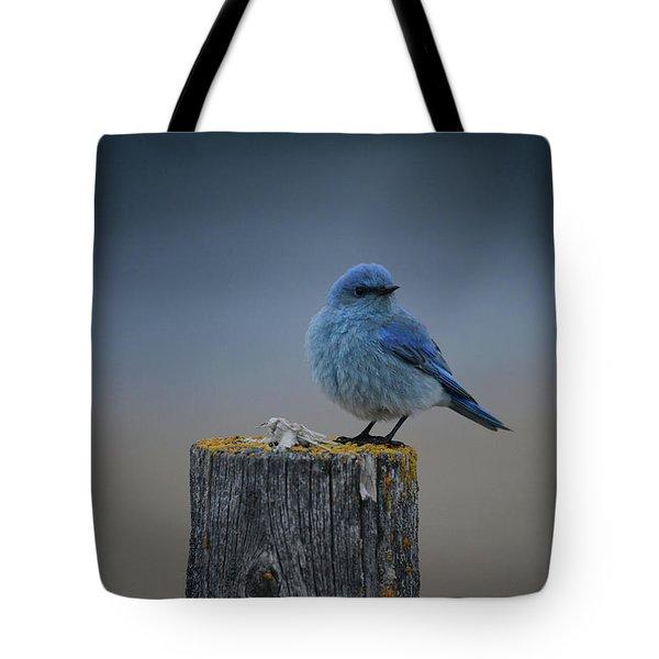 Mountain Bluebird 2 Tote Bag
