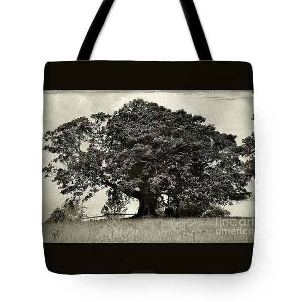 Old Fig Tree Tote Bag by Kaye Menner