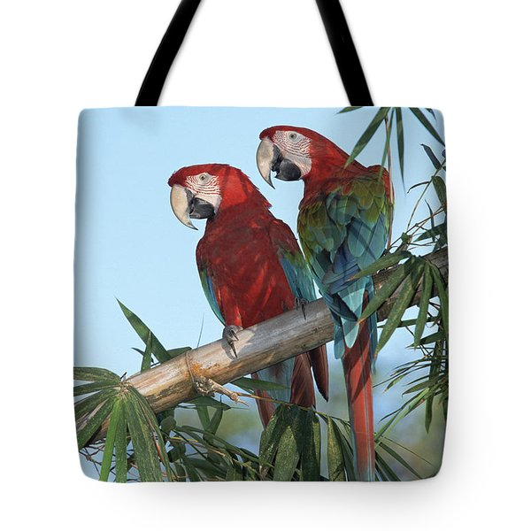Red And Green Macaw Ara Chloroptera Tote Bag by Konrad Wothe