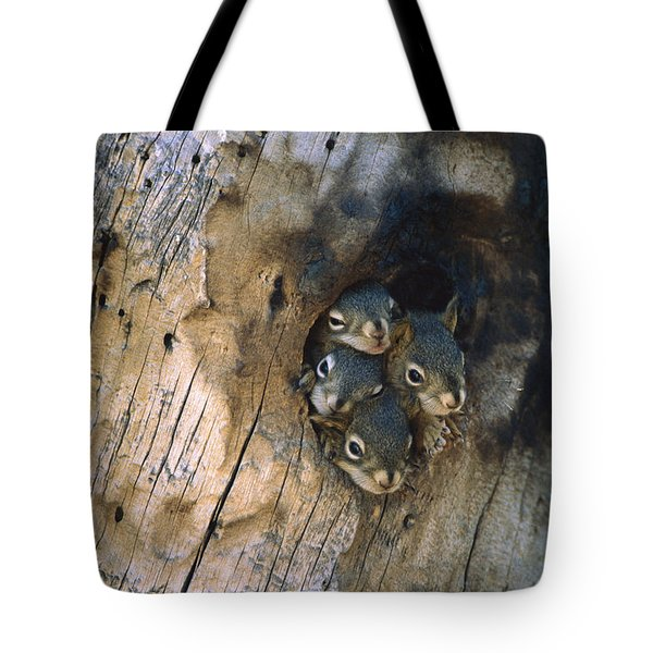 Red Squirrel Tamiasciurus Hudsonicus Tote Bag by Michael Quinton