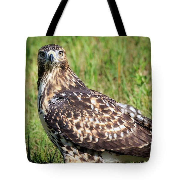 Red-tail Portrait Tote Bag