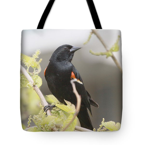Red Wing Blackbird Tote Bag