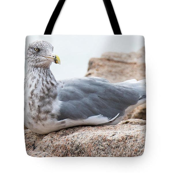 Tote Bag featuring the photograph Ring-billed Seagull by Michael D Miller
