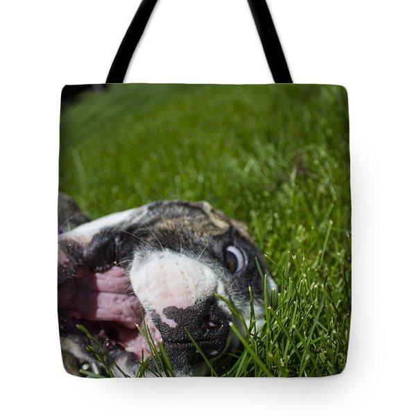 Roxy The Bulldog Puppy Tote Bag