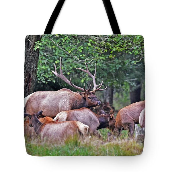 Royal Roosevelt Bull Elk Tote Bag