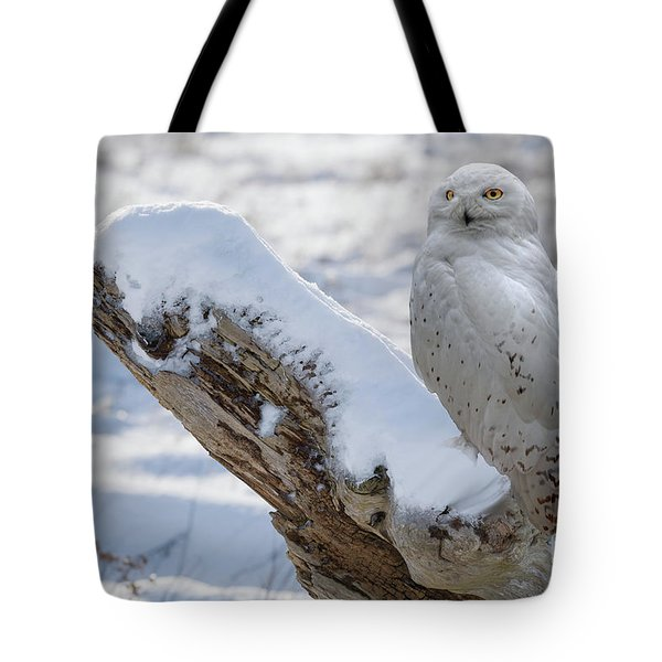 Tote Bag featuring the photograph Snowy Owl by Jim  Hatch