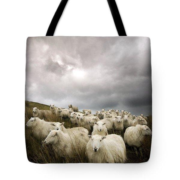 Welsh Lamb Tote Bag