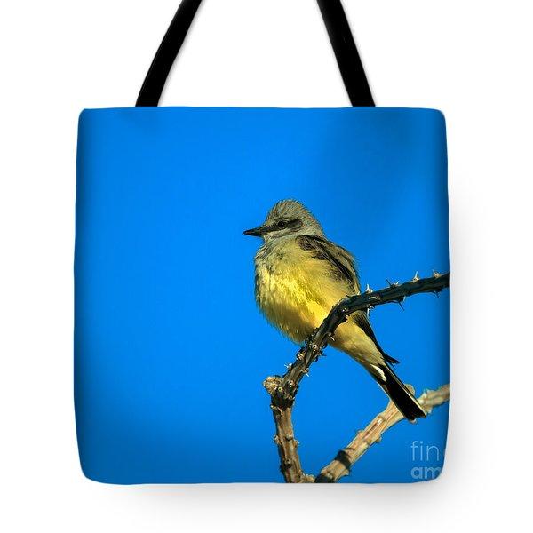 Western Kingbird Tote Bag by Robert Bales