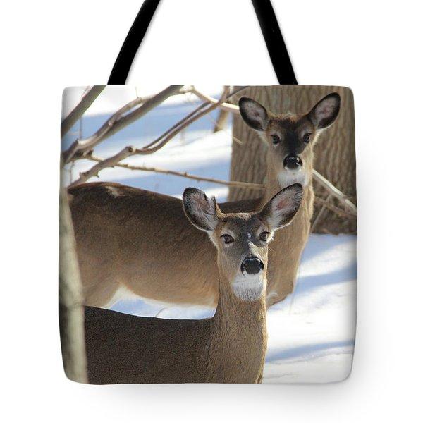 White Tailed Deer Smithtown New York Tote Bag