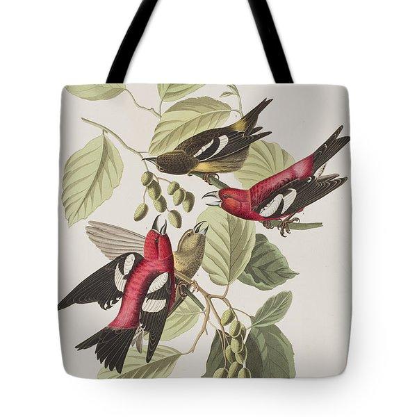 White-winged Crossbill Tote Bag by John James Audubon