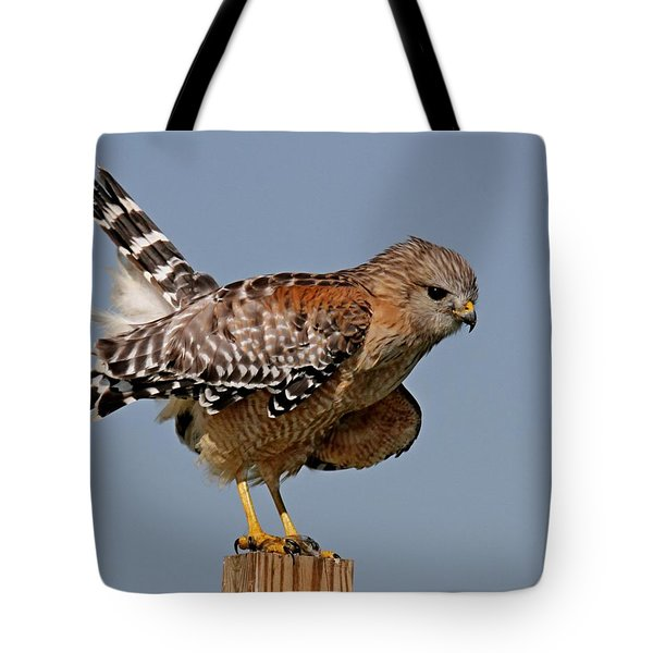 Red Shouldered Hawk Tote Bag
