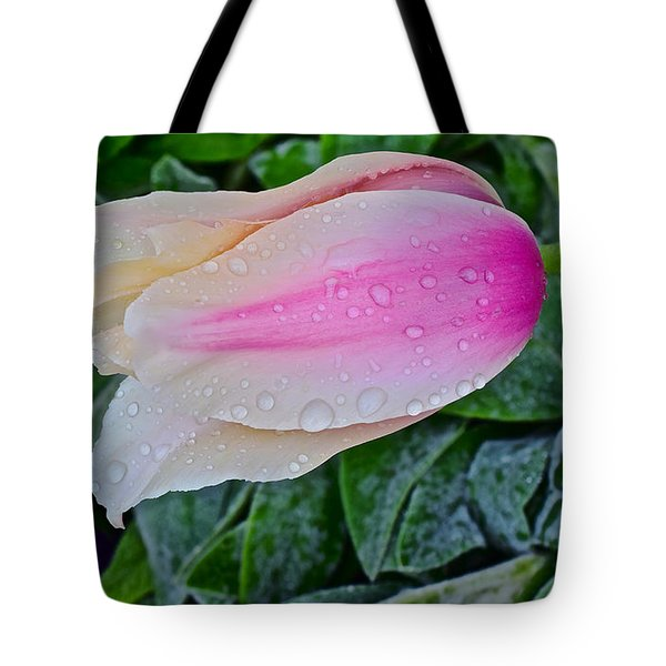 2015 Spring At Olbrich Gardens Lily Tulip In The Rain Tote Bag