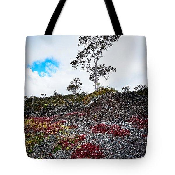 20150516144211fla24528-master Tote Bag by Fernando Lopez Arbarello