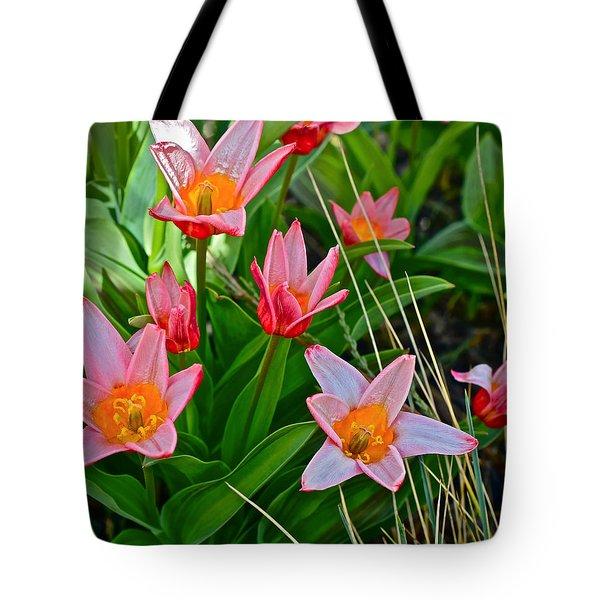 2016 Acewood Tulips 2 Tote Bag