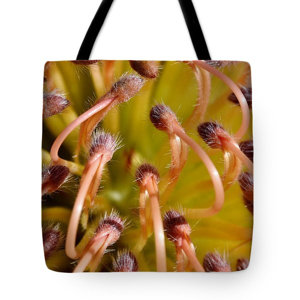 Common Pincushion Protea Tote Bag by Werner Lehmann