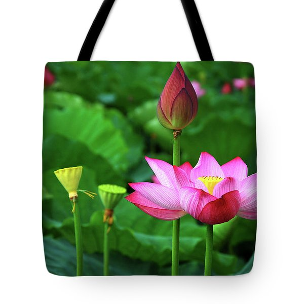 Tote Bag featuring the photograph Blossoming Lotus Flower Closeup by Carl Ning