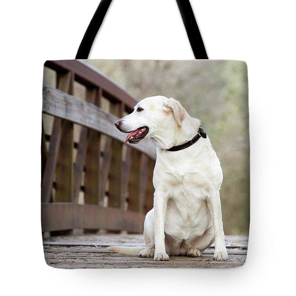 14 Tote Bag by Rebecca Cozart