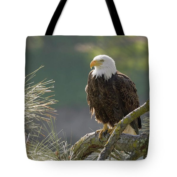 Bald Eagle Tote Bag by Doug Herr