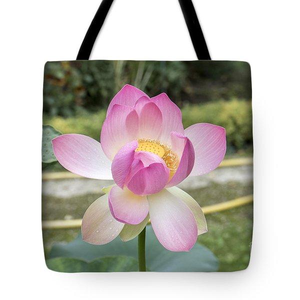 Beautiful Indian Lotus Tote Bag