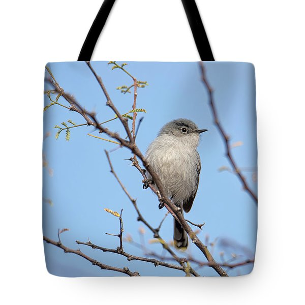 Black-tailed Gnatcatcher Tote Bag