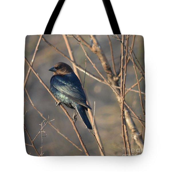 Brown Headed Cowbird Tote Bag