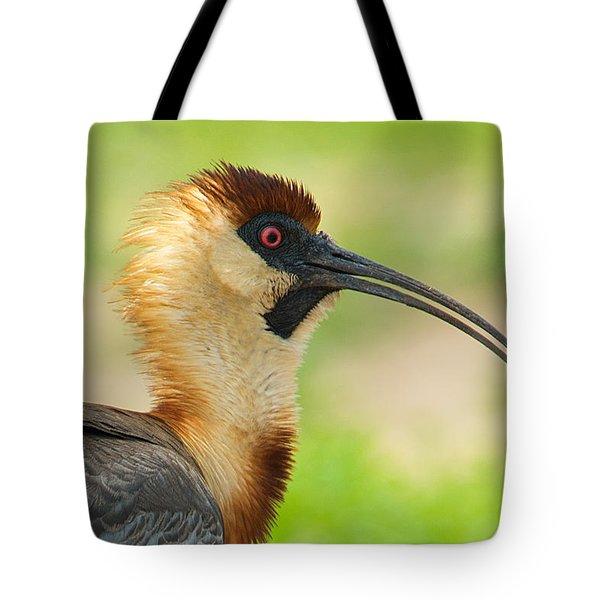 Buff-necked Ibis Theristicus Caudatus Tote Bag