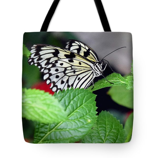 Paper Kite Butterfly No. 3 Tote Bag by Sandy Taylor