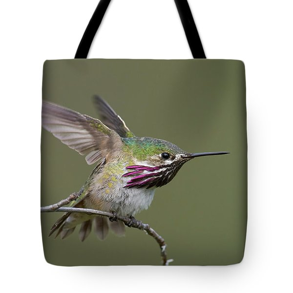 Calliope Hummingbird Tote Bag by Doug Herr