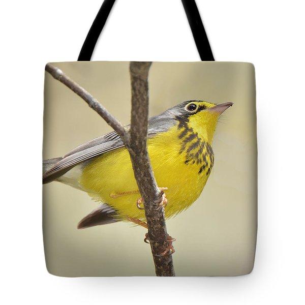 Canada Warbler Tote Bag by Alan Lenk