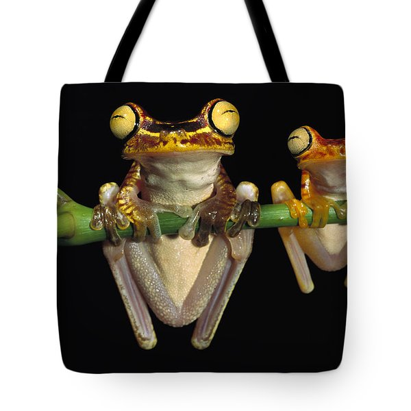 Chachi Tree Frog Hyla Picturata Pair Tote Bag