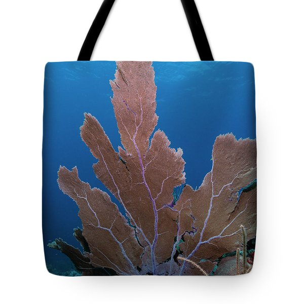 Tote Bag featuring the photograph Coral by Rico Besserdich