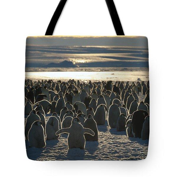 Emperor Penguin Aptenodytes Forsteri Tote Bag by Pete Oxford