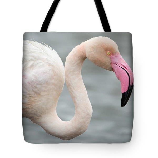 Greater Flamingo Phoenicopterus Roseus Tote Bag