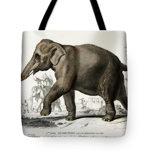 Indian Elephant, Endangered Species Tote Bag by Biodiversity Heritage Library