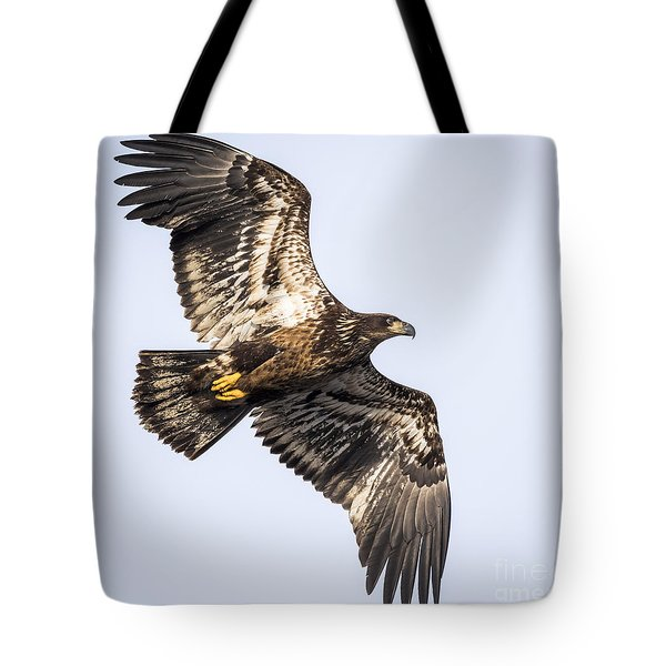 Juvenile Bald Eagle  Tote Bag