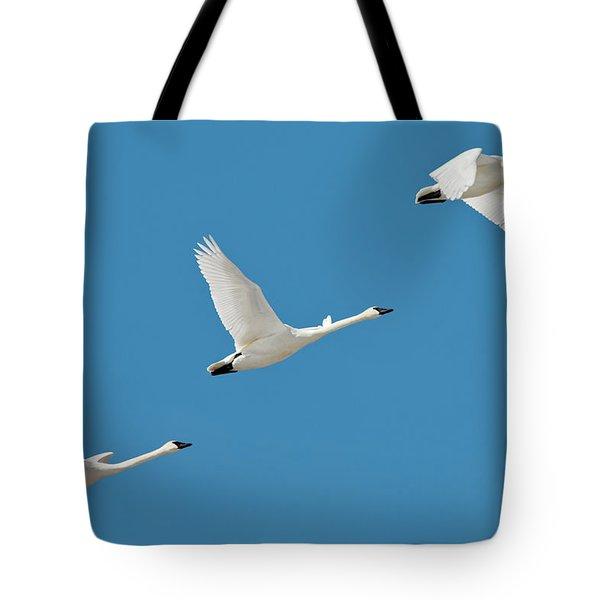 3 Montana Swans Tote Bag