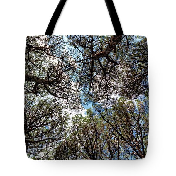 Pinewood Forest, Cecina, Tuscany, Italy Tote Bag by Elenarts - Elena Duvernay photo