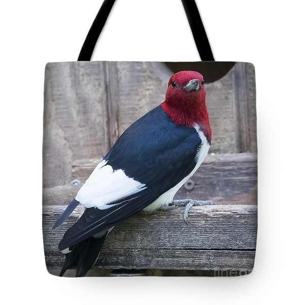 Tote Bag featuring the photograph Red-headed Woodpecker by Ricky L Jones