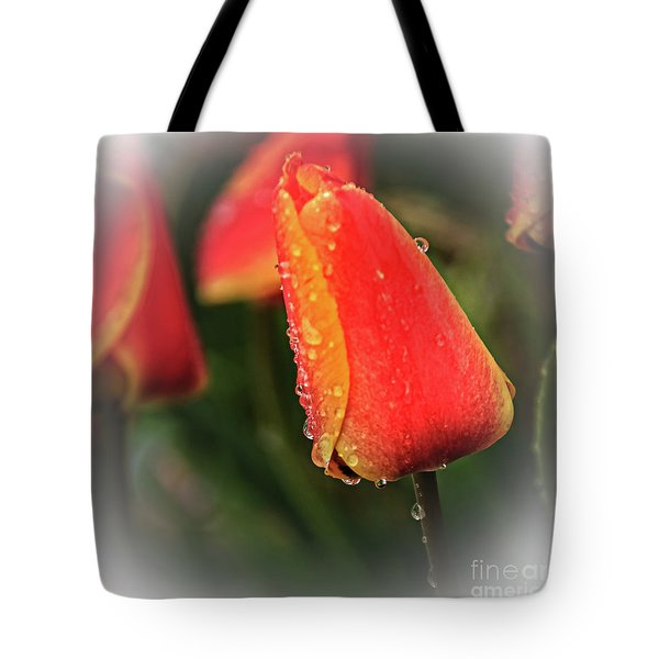 Tote Bag featuring the photograph Red Tulip  by Robert Bales